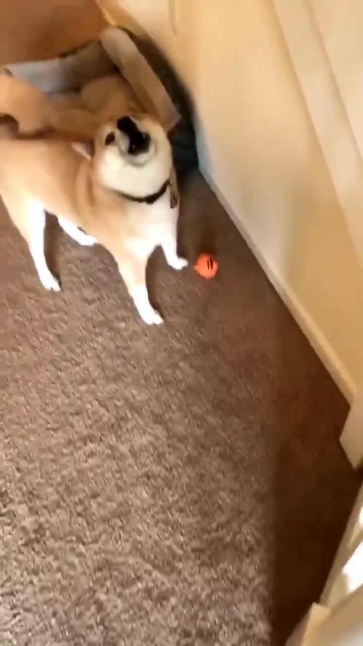 Do you like your new toy??. .. REEEEEEEEEE