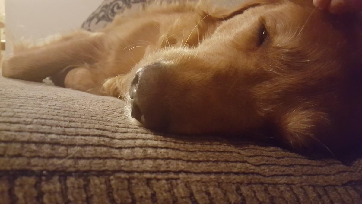 Dog getting old. Still a GOOD DOG THO.. Here's my good boy