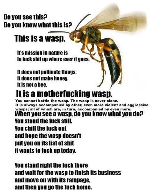 I hate wasps. .