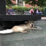 Dog lays down under a fountain to avoid rain.